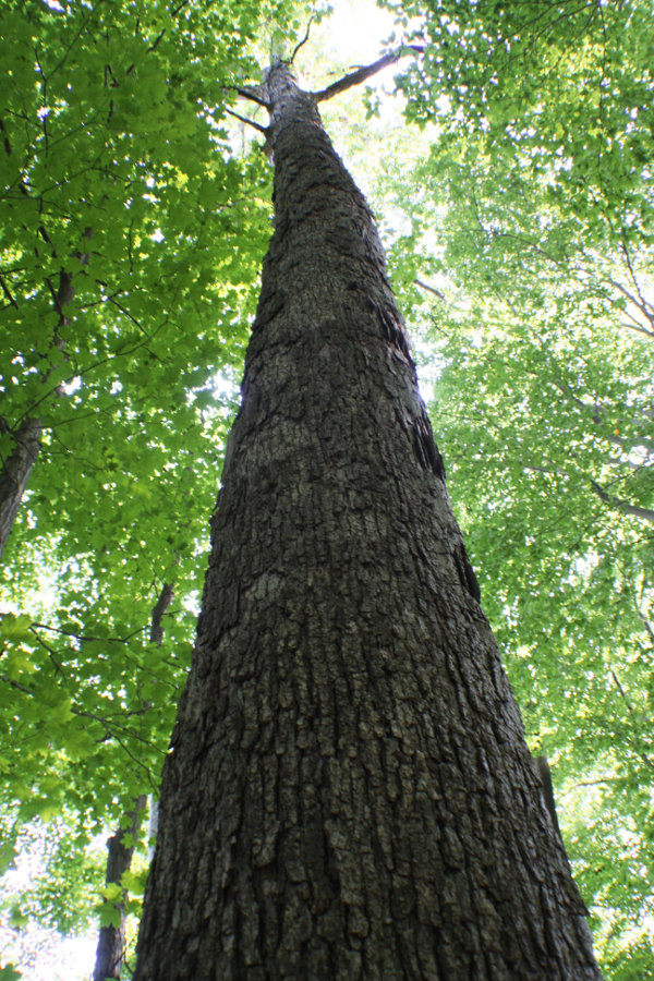 Tri-State Timber: Award Winning Timber Company