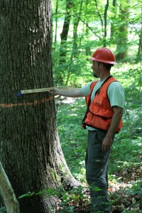 Forester marking timber