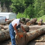 Sorting logs loggers logging