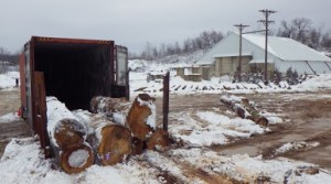 Logs to be shipped overseas sell trees